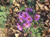 Kwiatki i takie tam ..._1
